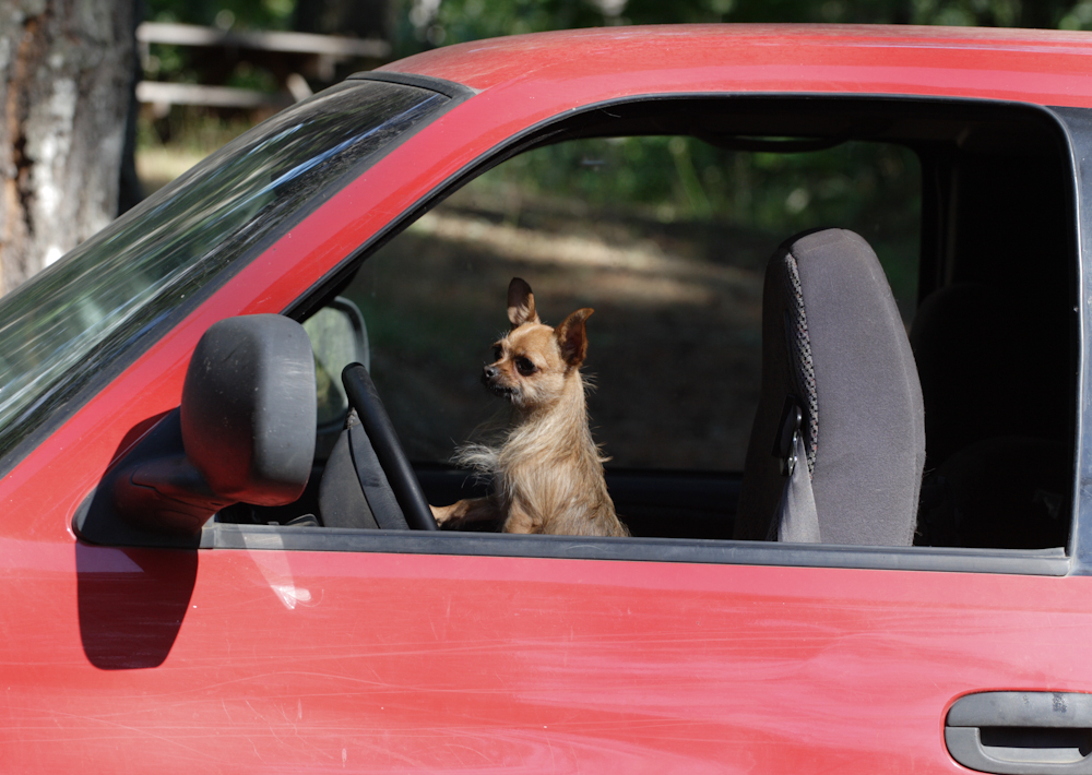 the cutest animal car rides you 39 ll ever see. Black Bedroom Furniture Sets. Home Design Ideas